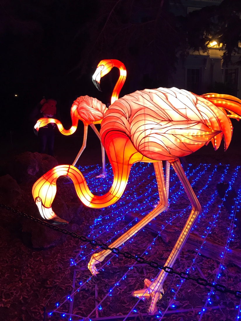 The Magical Lantern Festival:Review